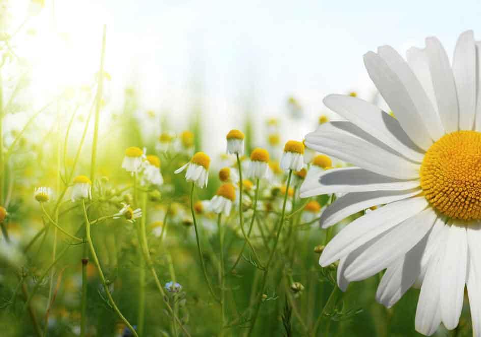 Homöopathie bei pflanzen